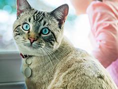 Pisica Tabby Se Apropie De Femeie Stând Pe Brațul Unei Canapele În Carouri Verzi Și Albe.