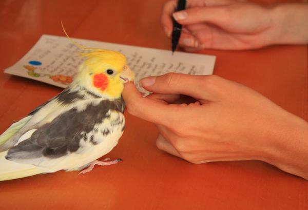 De Ce Papagalul Meu Aruncă Mâncare? - Cauze Care Determină Papagalul Să Arunce Alimente