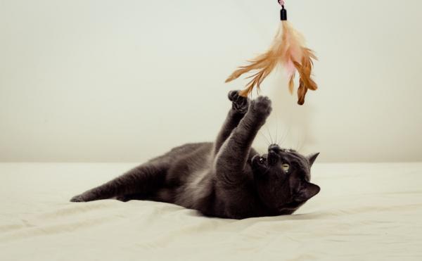 Cum Să-Mi Fac Pisica Să Mă Asculte? - Cunoașteți-Le Nevoile Și Veți Ști Cum Să Le Educați