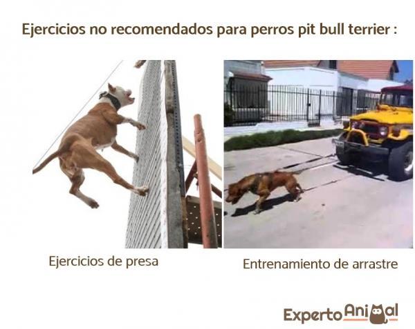 5 Exerciții Pentru Câinii Pit Bull - Exerciții Nerecomandate