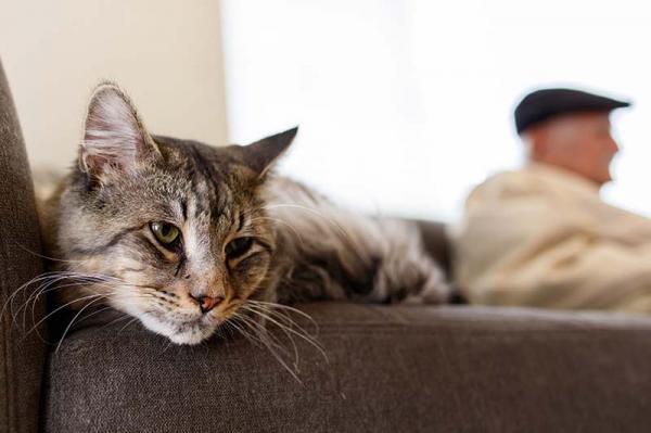 Cât Timp Ar Trebui Să Mă Joc Cu Pisica Mea? - Câți Ani Se Joacă Pisicile?