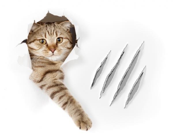 Caracterul Pisicii