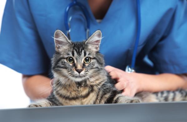De Ce S-A Schimbat Caracterul Pisicii Mele? - Ați Suferit Vreo Schimbare În Rutină?