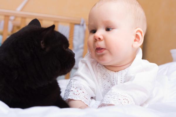 De Ce S-A Schimbat Caracterul Pisicii Mele? - Sosirea Unui Nou Animal De Companie Sau A Unui Membru Al Familiei
