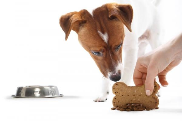 De Ce Câinele Meu Mârâie La Mine Când Mănâncă? - Ce Să Facem Când Câinele Nostru Mârâie La Noi În Timp Ce Mănâncă?