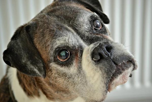 Câinele Meu Urinează Peste Tot - Cauze Și Soluții - Câinele Meu Urinează Peste Tot - Alte Cauze