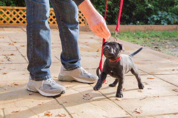 Câinele Meu Este Agresiv Față De Alți Câini - Cauze Și Soluții - De Ce Este Câinele Meu Agresiv Față De Alți Câini?