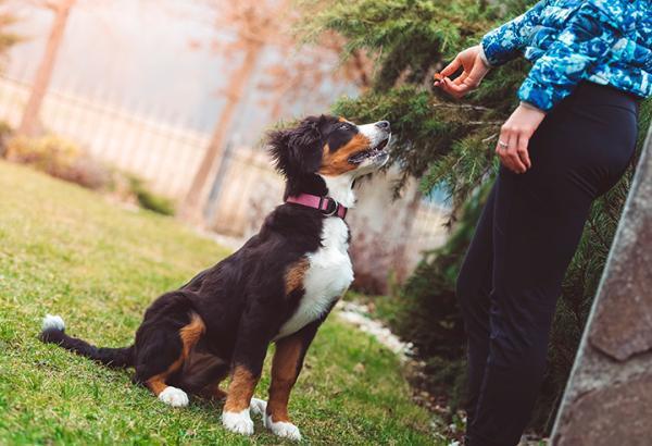 Câinele Meu Este Agresiv Față De Alți Câini - Cauze Și Soluții - Ce Să Fac Dacă Câinele Meu Devine Agresiv Față De Alți Câini?