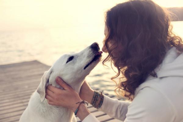 Câinele Meu Urinează Peste Tot - Cauze Și Soluții - Ce Pot Face Dacă Câinele Meu Urinează Peste Tot?