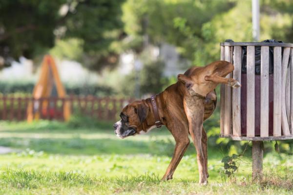 10 Motive Pentru A Vă Plimba Câinele - 1. Ar Trebui Să Se Ușureze