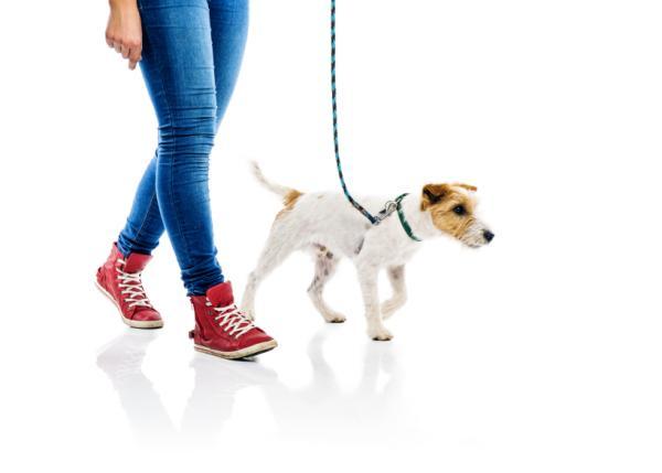 Sfaturi Pentru Câinii Distructivi - 2. Educați-Vă Câinele În Ascultare Canină