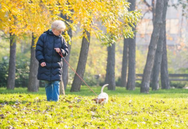 10 Motive Pentru A Vă Plimba Câinele - 3. Ei Pot Adulmeca, O Modalitate De A Ușura Stresul