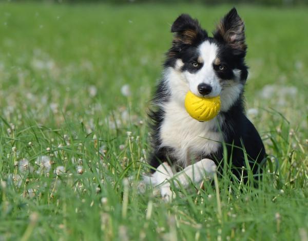 10 Motive Pentru A Vă Plimba Câinele - 4. Se Exercită