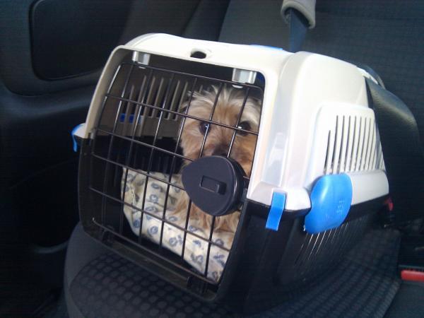 Sfaturi Pentru Câinii Distructivi - 5. Obișnuiește-Ți Câinele Să Folosească Lada De Călătorie