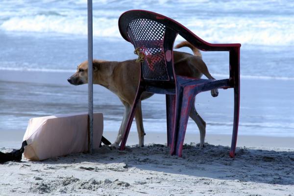10 Motive Pentru A Vă Plimba Câinele - 5. Ei Își Marchează Teritoriul