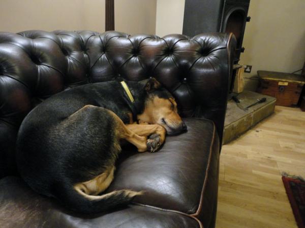Sfaturi Pentru Câinii Distructivi - 6. Decideți Câtă Libertate Poate Avea Câinele Dvs. Atunci Când Este Lăsat Singur În Interior