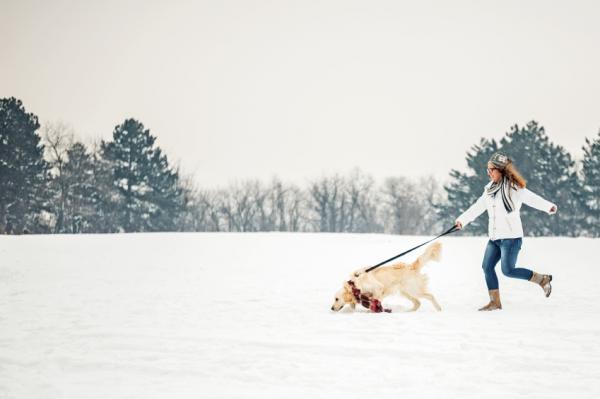10 Motive Pentru A Vă Plimba Câinele - 6. Ei Trebuie Să Exploreze