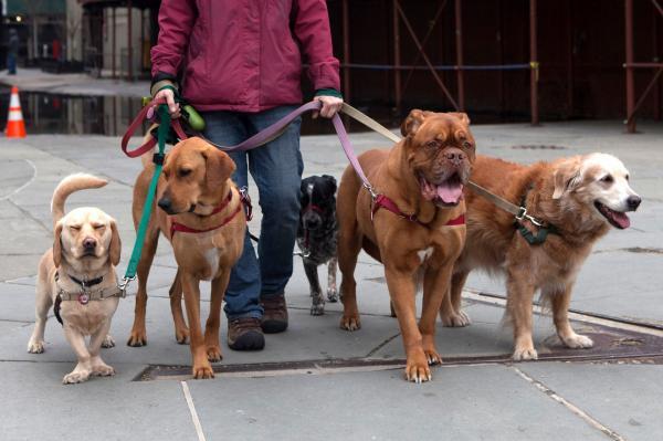 Sfaturi Pentru Distrugerea Câinilor - 8. Luați În Considerare Pasagerii De Câini Și Serviciile De Îngrijire Pentru Copii