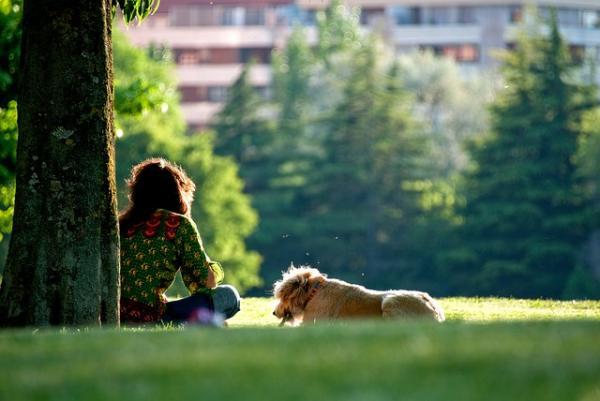 10 Motive Pentru A Vă Plimba Câinele - 8. Au Vitamine De La Soare