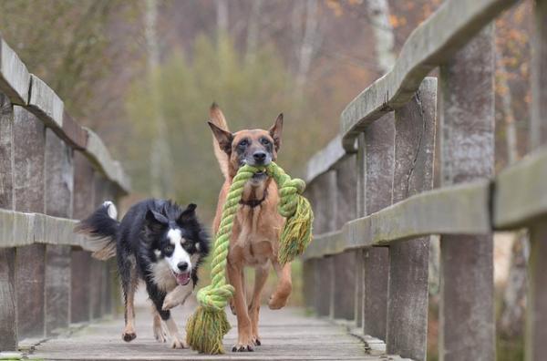 10 Motive Pentru A Vă Plimba Câinele - 9. Distrați-Vă, Mult!