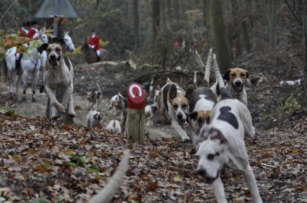 12 Tipuri De Agresivitate Canină - 11. Agresiune Prădătoare