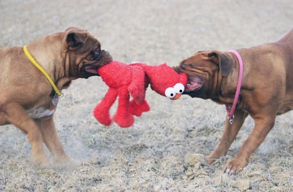 12 Tipuri De Agresiune Canină - 3. Prin Deținerea Resurselor