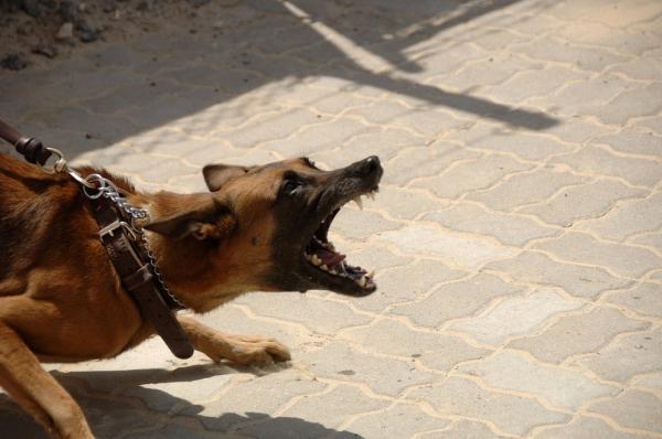 12 Tipuri De Agresiune Canină - 7. Agresiune Deplasată Sau Redirecționată