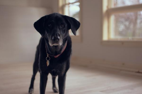 12 Tipuri De Agresivitate Canină - 9. Agresiune Datorată Modificărilor Fiziologice