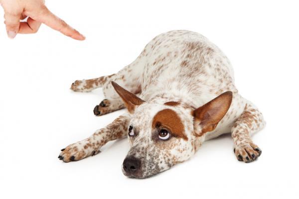15 Greșeli La Antrenarea Unui Câine - 1. Folosirea Antrenamentului Tradițional Al Câinilor