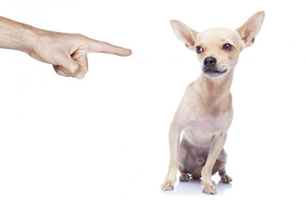 15 Greșeli La Antrenarea Unui Câine - 4. Pedepse