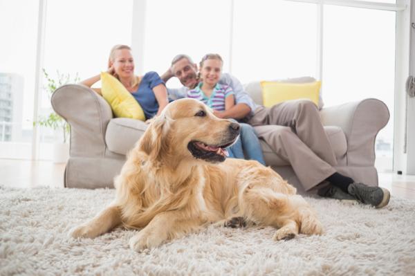 15 Greșeli La Antrenarea Unui Câine - 6. Coerență