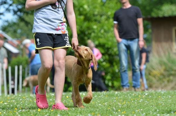 15 Greșeli La Antrenarea Unui Câine - 8. Alegerea Condițiilor Greșite Pentru Fiecare Sesiune