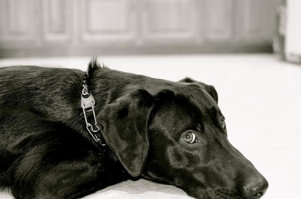 Antrenamentul Tradițional Al Câinilor - Cum Funcționează Antrenamentul Tradițional Al Câinilor