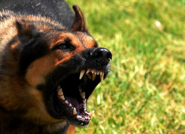 Antrenamentul Tradițional Pentru Câini - Dezavantaje Ale Antrenamentului Tradițional Pentru Câini