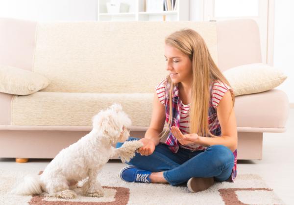 Cum Ar Trebui Să Fie O Sesiune De Antrenament Pentru Câini? - Perioade Și Sesiuni De Antrenament