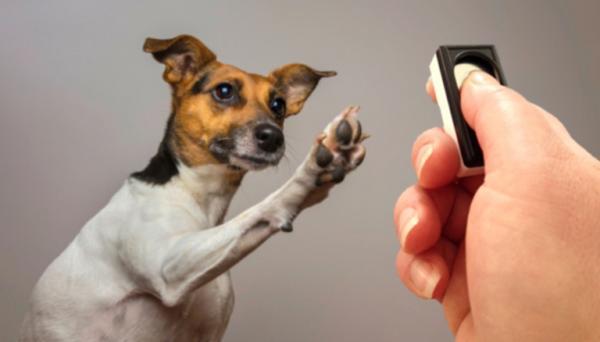 Condiționarea Clasică La Câini - Condiționarea Clasică La Antrenamentul Câinilor