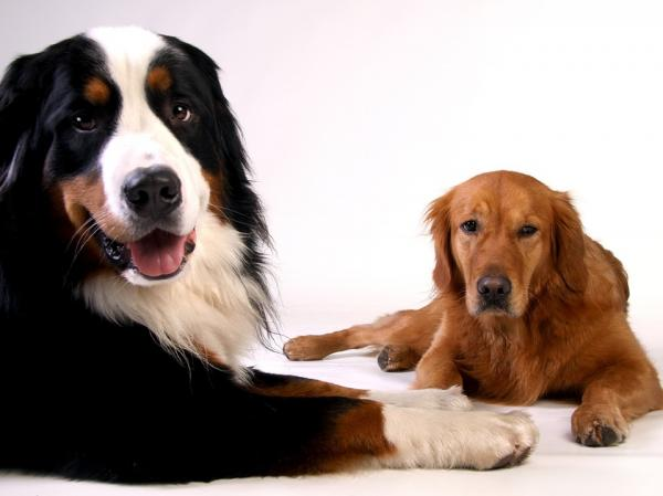 Sfaturi Pentru A Vă Obișnui Câinele Cu Lada De Călătorie - Sfaturi Pentru A Vă Obișnui Câinele Cu Lada De Călătorie