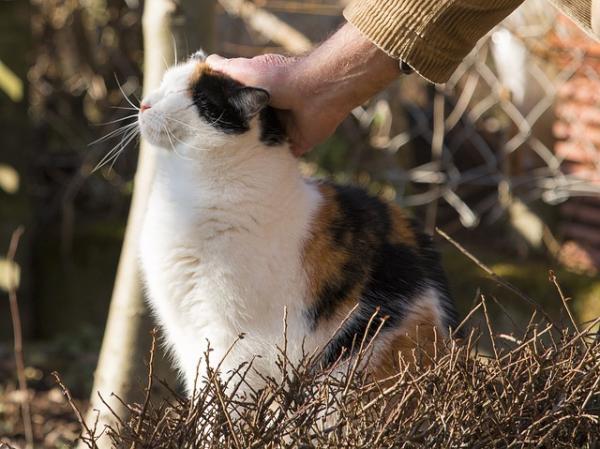Sfaturi Pentru A Face O Pisică Mai Socială - Obligațiuni Sociale Pozitive