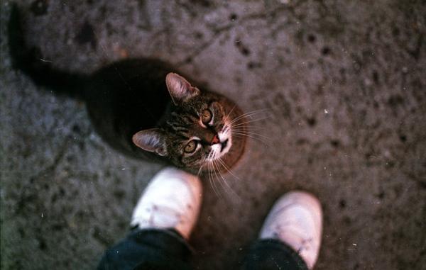 Sfaturi Pentru A Face O Pisică Mai Sociabilă - Iubire Și Dragoste Pură