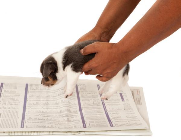 Sfaturi Pentru Educația Pentru Igiena Cățelului - Instruire Pe Hârtie