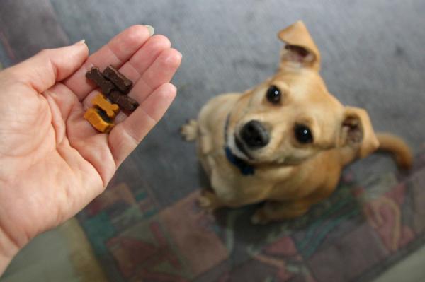Corectați Comportamentele Unui Câine - Întărire Pozitivă