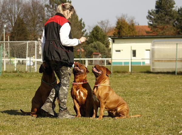 Criterii De Antrenament Pentru Câini - Doar Un Criteriu În Fiecare Sesiune