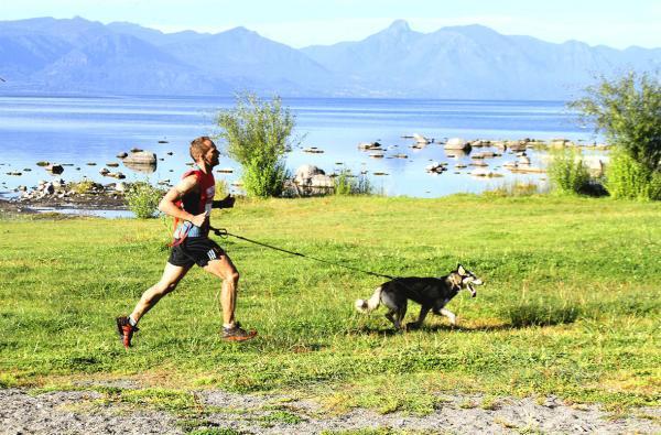 Sporturi Pentru Câini - Canicross
