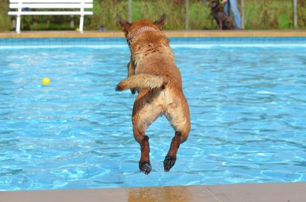 Exerciții Pentru Câinii Hiperactivi - Excesul De Energie La Câini, De Ce Se Întâmplă?