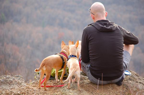 Exerciții Pentru Câinii Hiperactivi - 1. Plimbări Lungi