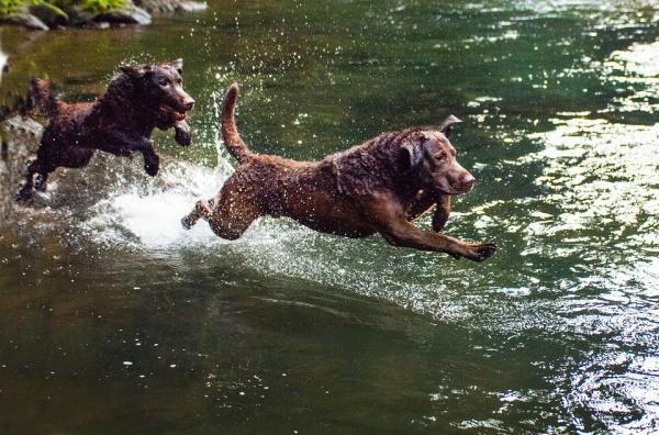 Exerciții Pentru Câinii Hiperactivi - 4. Joacă-Te Cu Câinele Tău