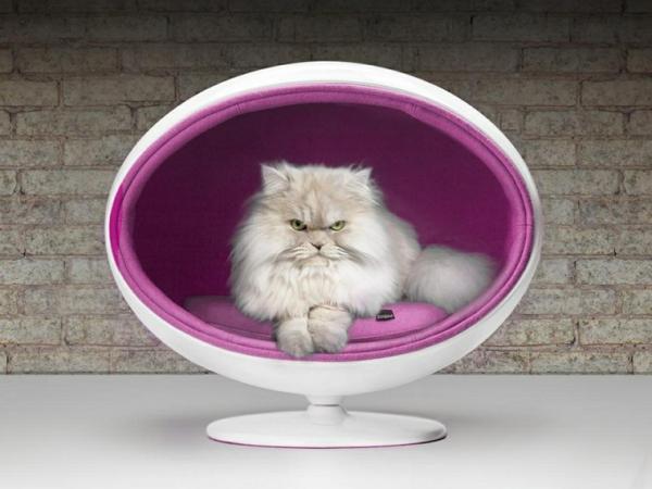 Învățându-Mi Pisica Să Doarmă În Patul Ei - Alegeți Un Pat Potrivit