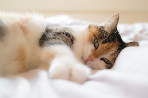 Învățându-Mi Pisica Să Doarmă În Patul Ei - Sfaturi Pentru Ca Pisica Ta Să Doarmă În Patul Ei