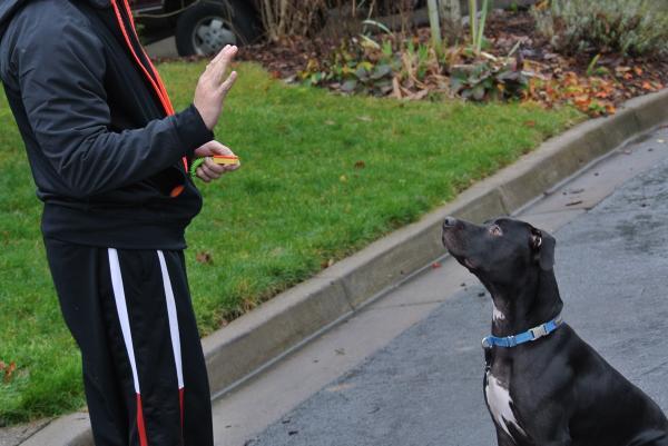 Învață-L Pe Câinele Meu Să Se Întindă - Criteriul 1: Câinele Tău Se Va Întinde Când Faci Semnal