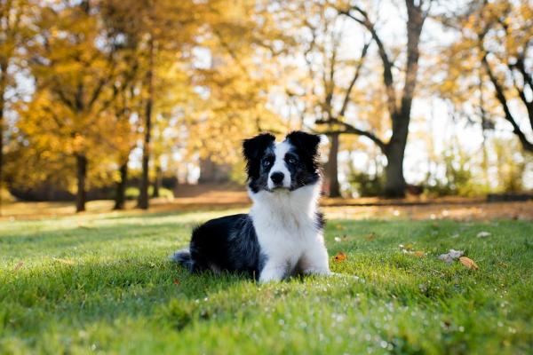 Învățându-Mi Câinele Să Se Întindă - Criteriul 3: Câinele Tău Se Va Întinde Chiar Dacă Te Miști